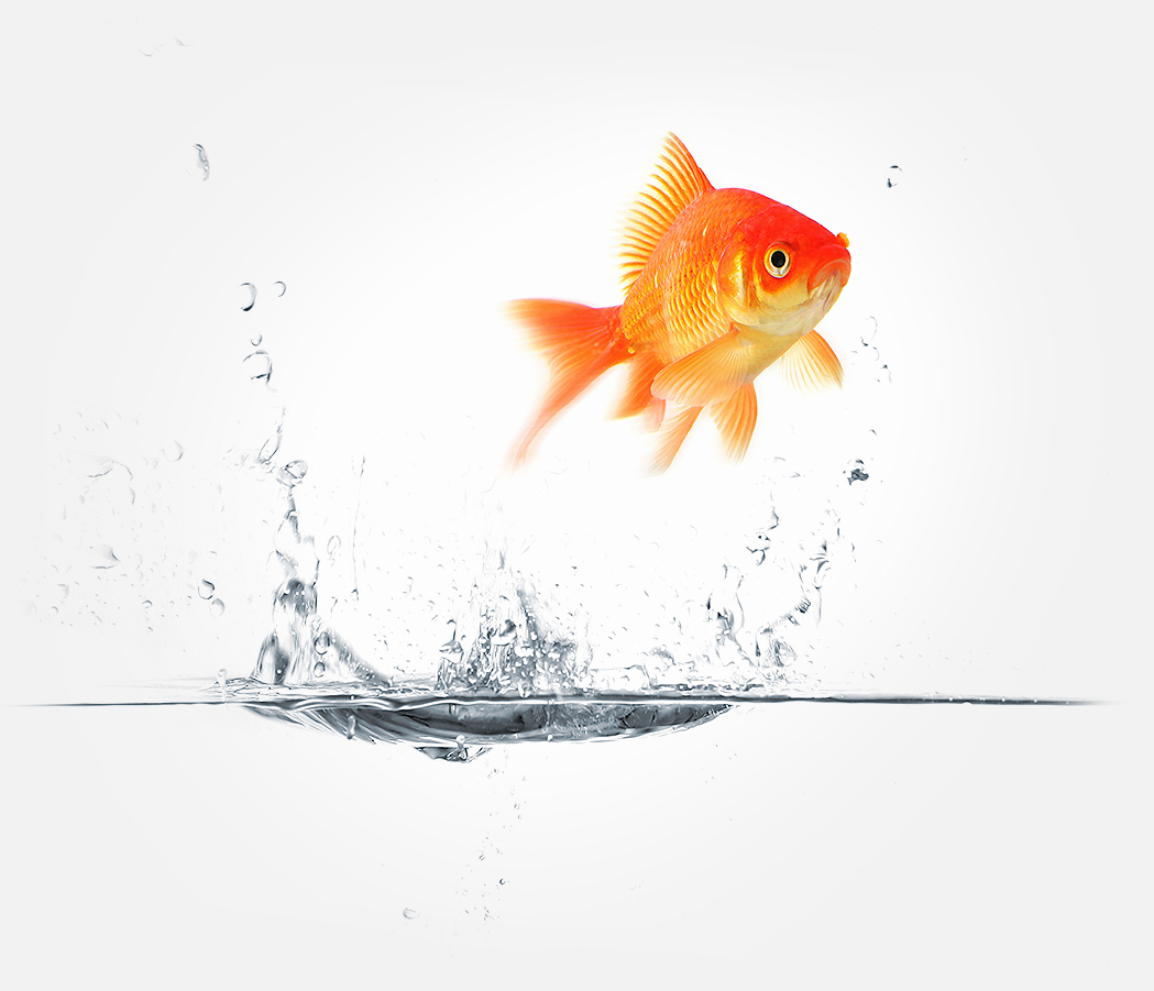 goldfish_jumping
